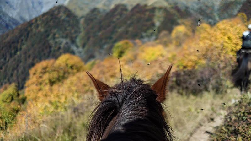 drei tages wanderung im lagodekhi national park