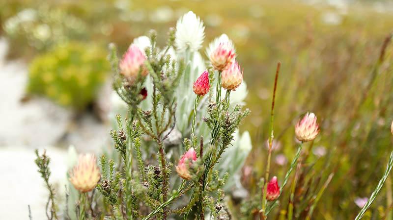 flora und fauna südafrika