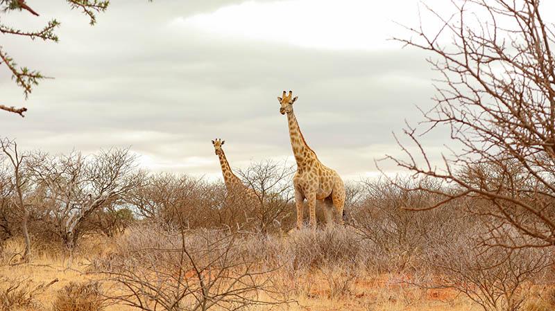 südafrika national park geheimtipp