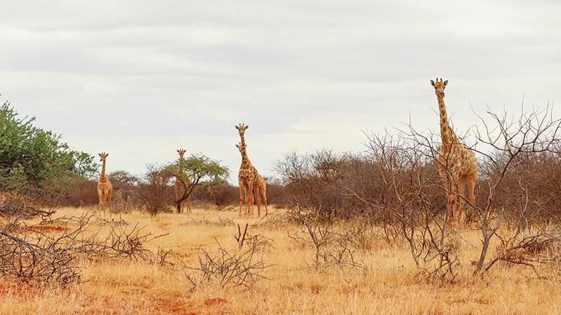 geheimtipp südafrika national park