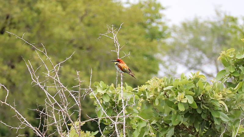 unterkünfte buchen sanparks südafrika national parks