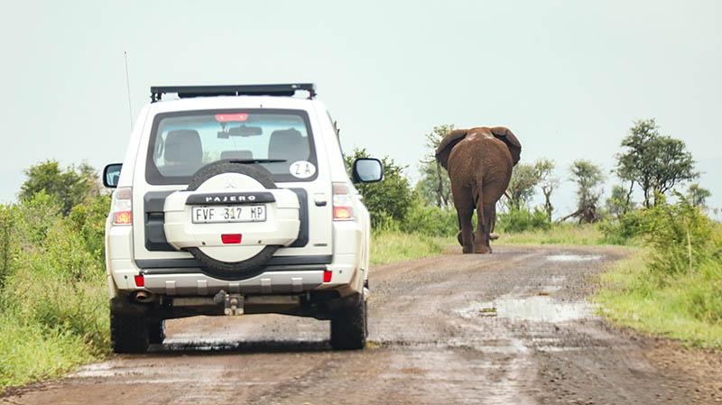 mietwagen südafrika kruger national park selbst fahren