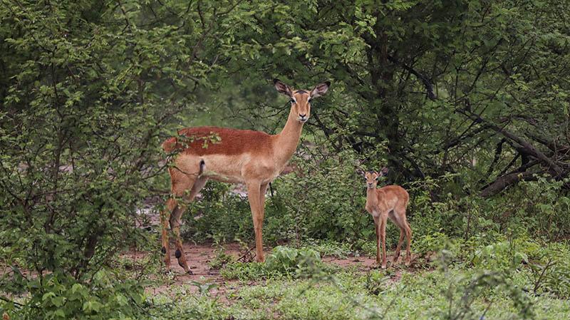 kruger national park safari mit übernachtung