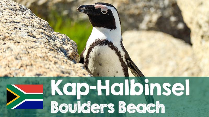youtube video simonstown pinguine kapstadt