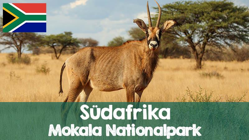 suedafrika mokala nationalpark highlights